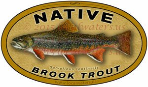 Native Brook Trout Decal fishing sticker