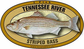 Tennessee River Striped Bass