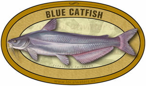 Blue Catfish sticker custom design