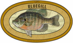 Bluegill sticker custom design