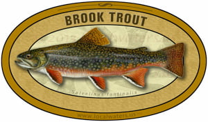 Brook Trout sticker custom design