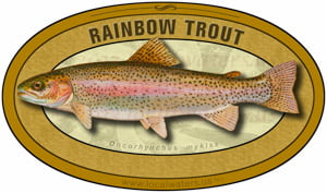 Rainbow Trout sticker custom design