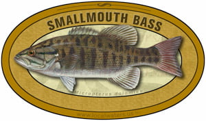 Smallmouth Bass sticker custom design