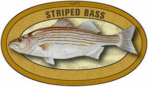 Striped Bass sticker custom design