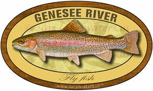 Genesee River Rainbow Fly Fish