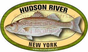 Hudson River New York Striped Bass Sticker