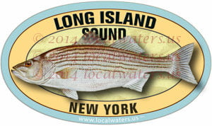 Long Island Sound New York Striped Bass Decal