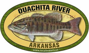 Ouachita River smallmouth bass