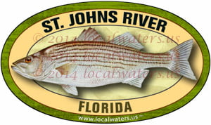 St. Johns River Florida Striped Bass Sticker