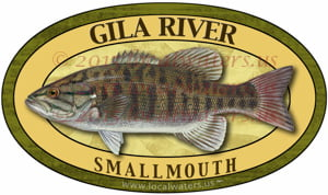 Gila River Smallmouth Bass