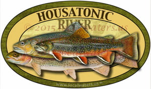 Housatonic River Brown Rainbow Brook Trout