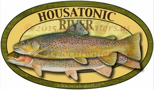 Housatonic River Brown Rainbow Trout