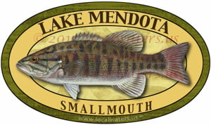 Lake Mendota Smallmouth Bass