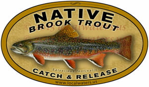 Native Brook Trout Decal catch & release fishing sticker