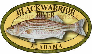 Blackwarrior River Sticker Striped Bass Decal Fishing Alabama