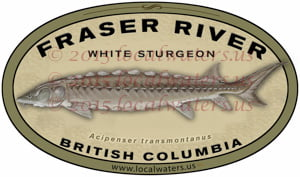 Fraser River White Sturgeon Fishing Decal British Columbia Sticker Canada