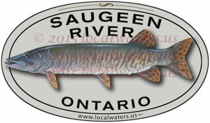 Saugeen River Sticker Muskellunge Fishing Decal Ontario muskie musky