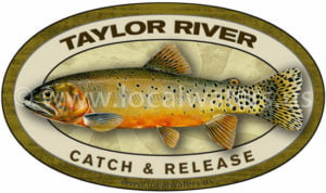 Taylor River Cutthroat Trout Catch and Release