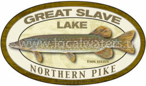 Great Slave Lake Northern Pike Sticker Fishing Decal Logo