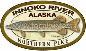 Innoko River Northern Pike Alaska Fishing Sticker Decal logo