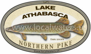 Lake Athabasca Northern Pike Sticker Fishing Decal logo