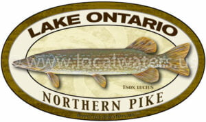 Lake Ontario Northern Pike Sticker Fishing Decal logo