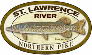 St. Lawrence River Northern Pike Sticker Fishing Decal logo